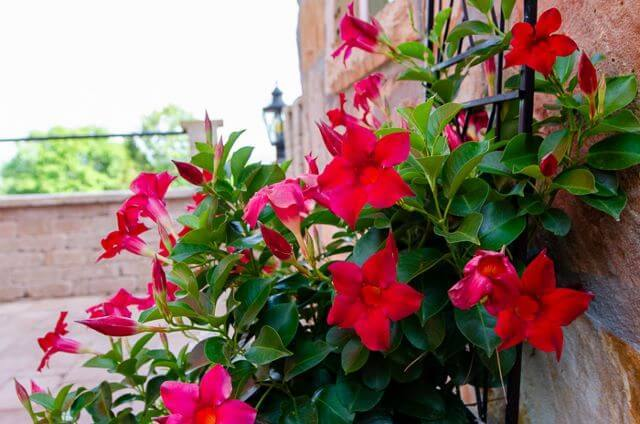 red flowers growing on the patio